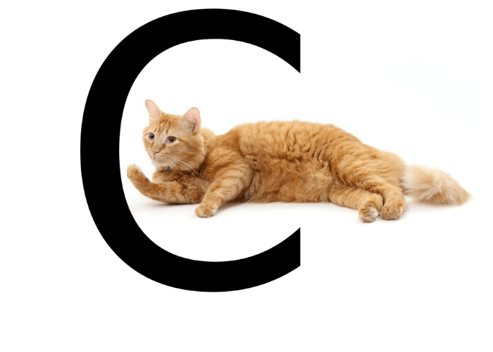 funniest cat names