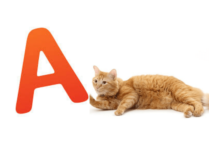 funny cat names