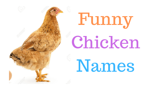 Funny Chicken Names