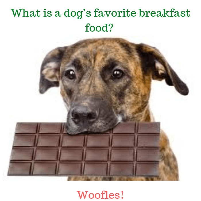 What is a dog's favorite breakfast food Woofles!