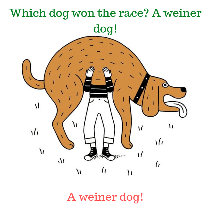 Which dog won the race A weiner dog!