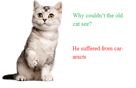 Why couldn't the old cat see He suffered from car-aracts