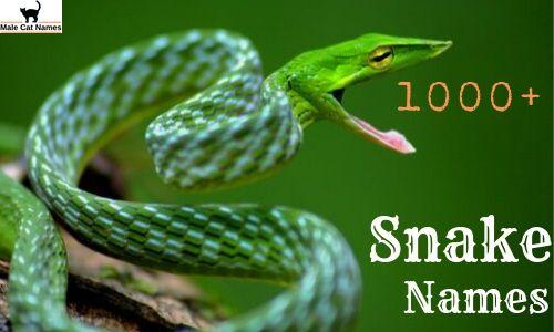 1000+ Snake Names