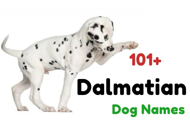 101 Dalmatian Names | All Dog Names [Male+Female]