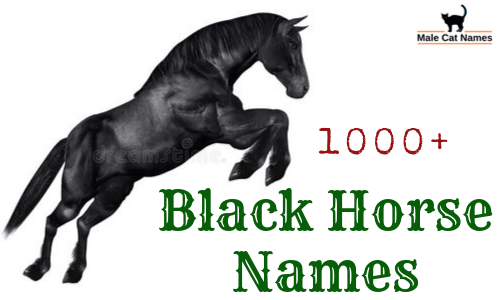 Amazing Names For A Black Horse