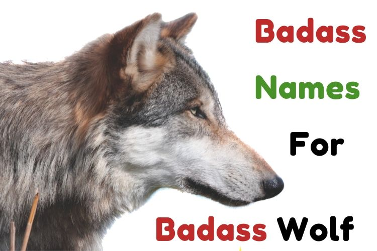 Badass Names For Badass Wolf