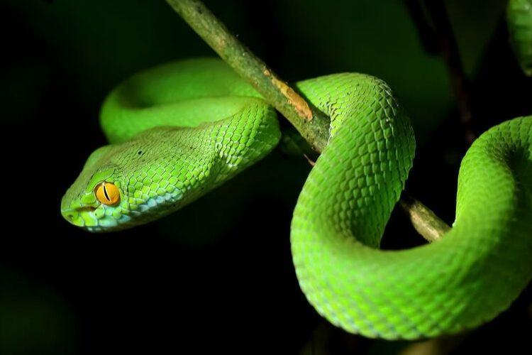 Badass Pet Snake Names