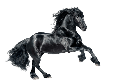 Black horse name in other languages