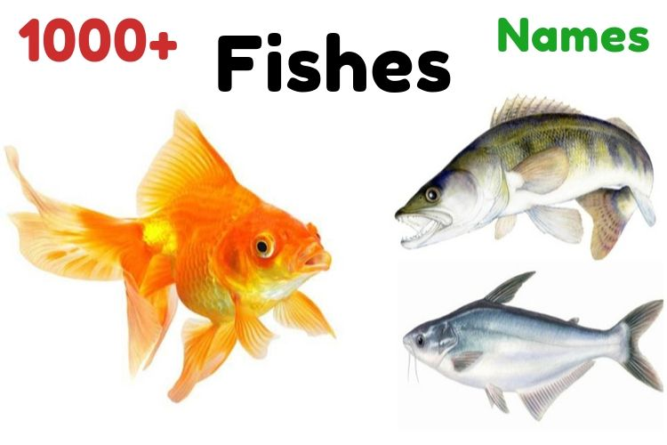 1000+ Names of Fishes | Which is Most Famous, Funny Fish Names
