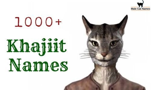 Khajiit Names: 1000+ Amazing Name for  A Lore Khajiit