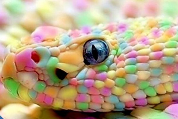 Snake Names from Colors