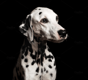 Unique Dalmatian Names