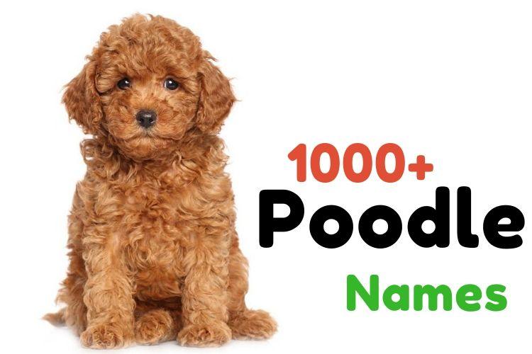 poodle names