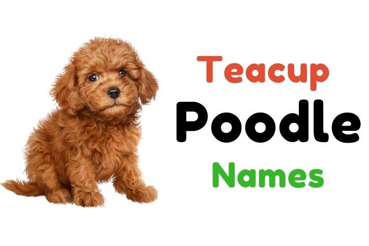 teacup poodle names