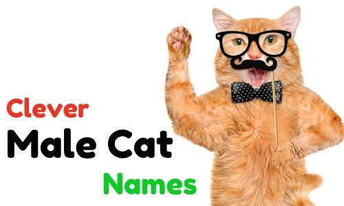 Top Best Cute And Clever Male Cat Names Funny Hilarious Punny