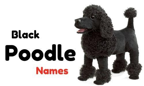 black poodle names